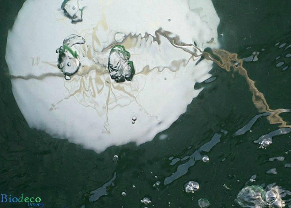 Asbijzetting in de Noordzee van een oplosbare zee-urn met een windroos op de deksel
