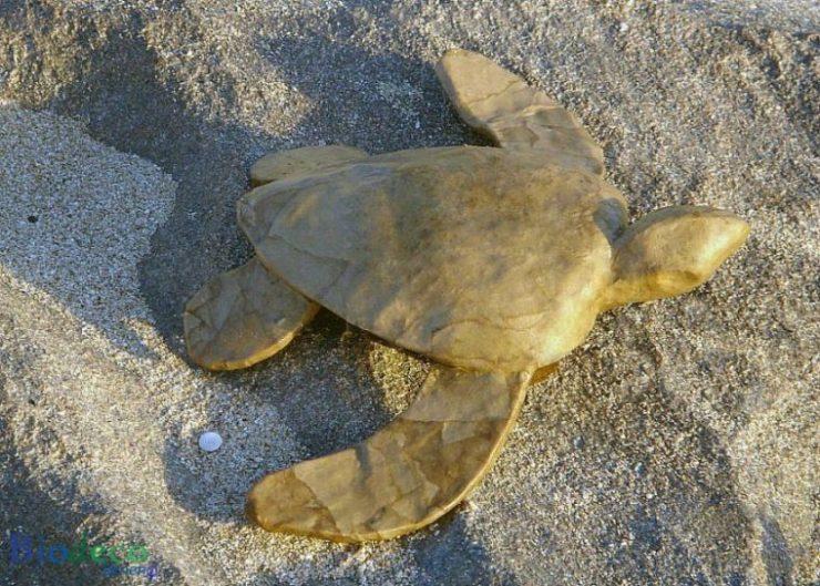 De mini zee-urn Schildpad, van gerecycled papier, op het strand van Scheveningen