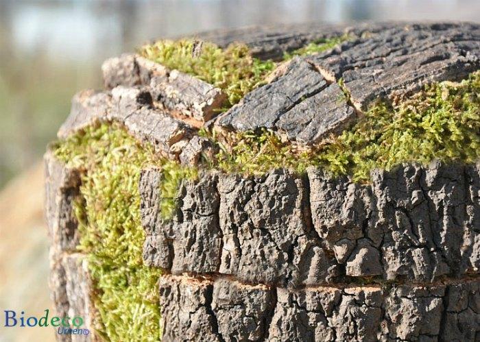 Detail van een biologisch afbreekbare Kurkeikenschors-urn, handmatig afgewerkt met de schors van de Kurkeik voor een asbijzetting in de aarde